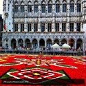 Alfombra flores Grand Place Bruselas, Eventos Cultura Flandes Bélgica - ©Stephanie Brown