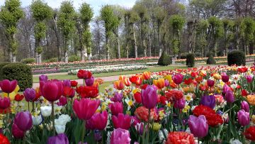 Floralia Brussels - a symphony of flowers