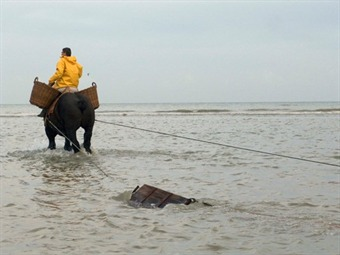 Shrimp fishermen on horseback - Oostduinkerke