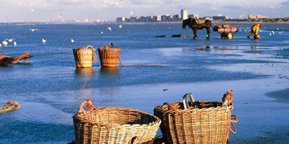 The world's last horseback shrimp fishermen, Oostduinkerke