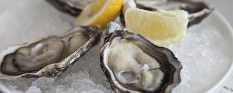 Oysters ©carl_pendle