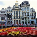 Alfombra Flores 2012 Grand Place Bruselas, Eventos Cultura Flandes Bélgica - ©Stephanie Brown